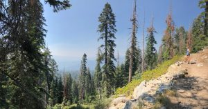 Sequoia National Park Itinerary : The Best Things to Do for a Weekend Trip