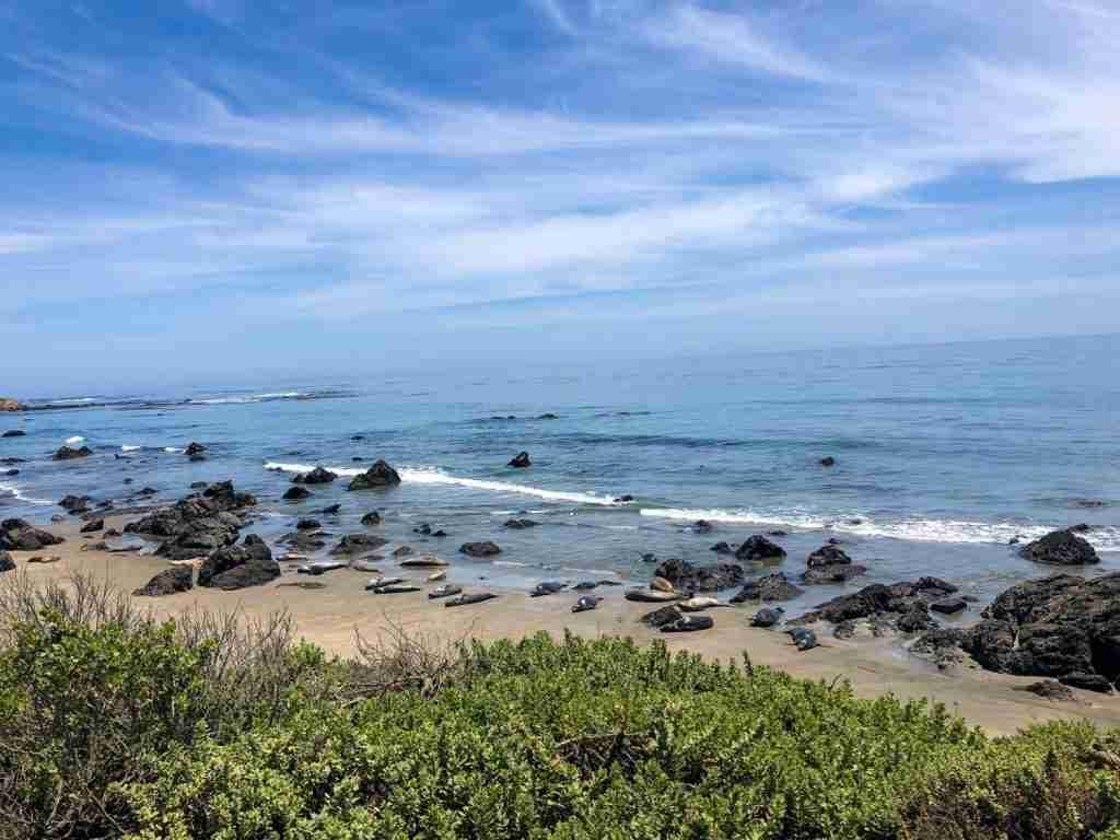 elephant seal vista california