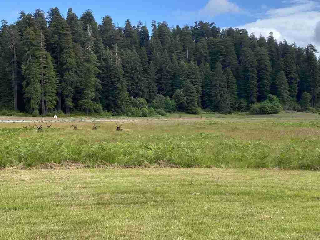 elk redwood national park