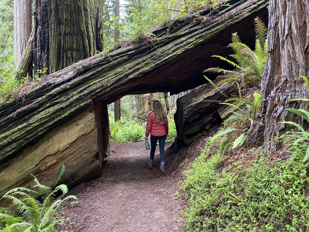 best things to do at redwood national park