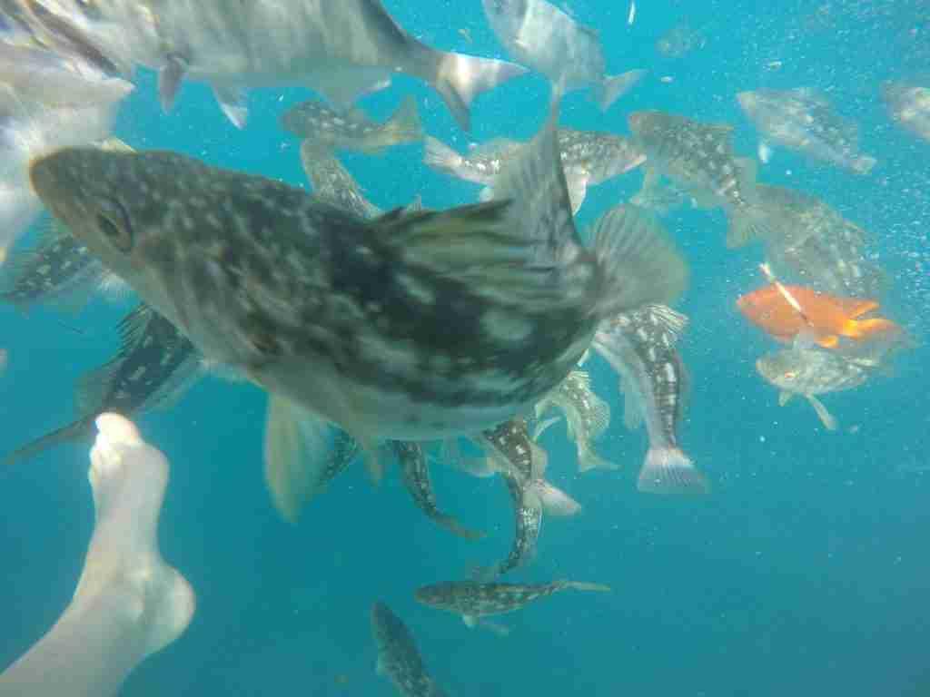 snorkeling catalina island
