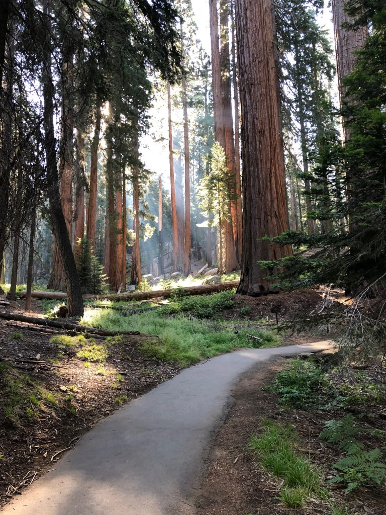 best things to do in sequoia national park